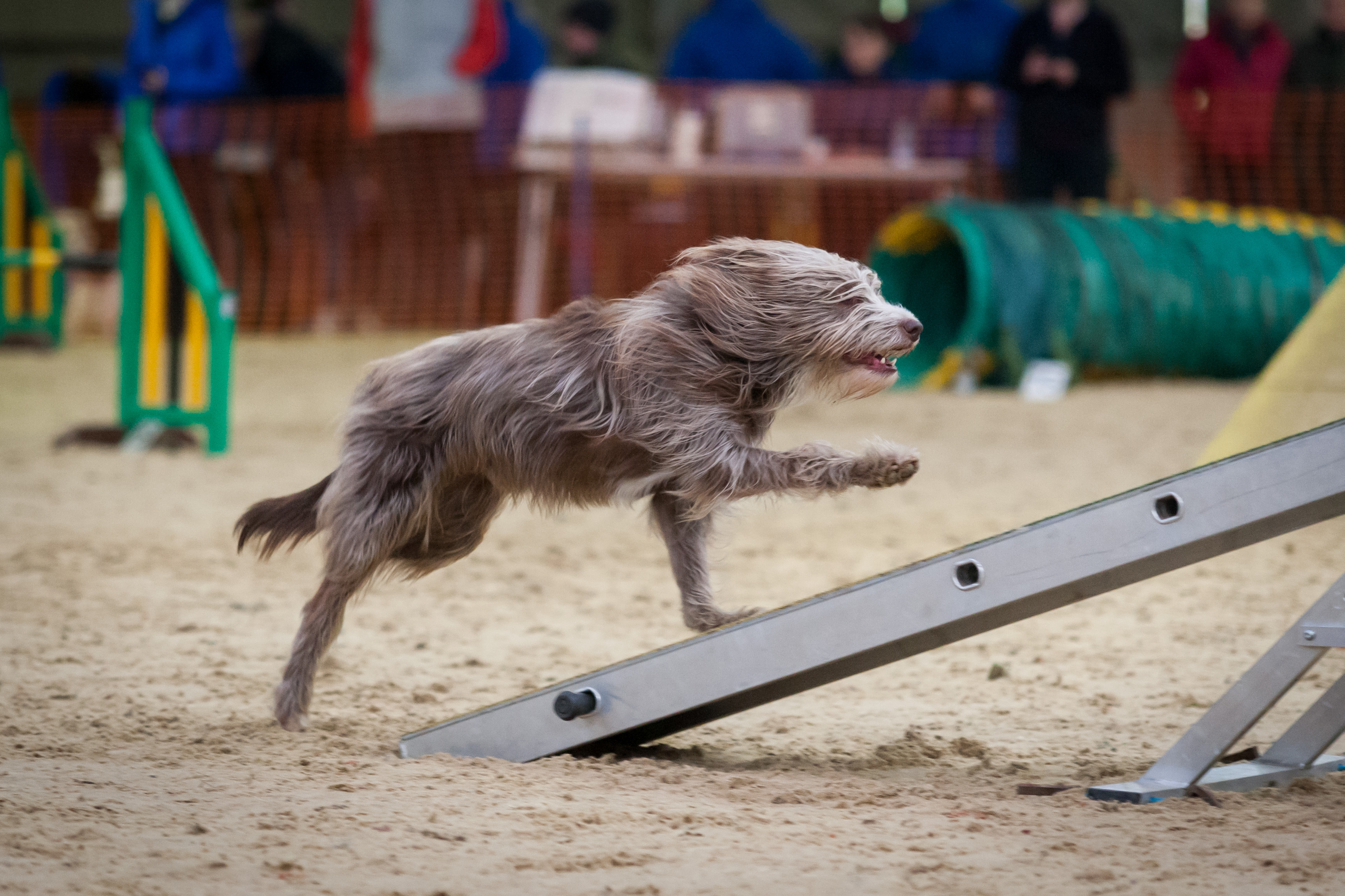 Windrush Dog Agility