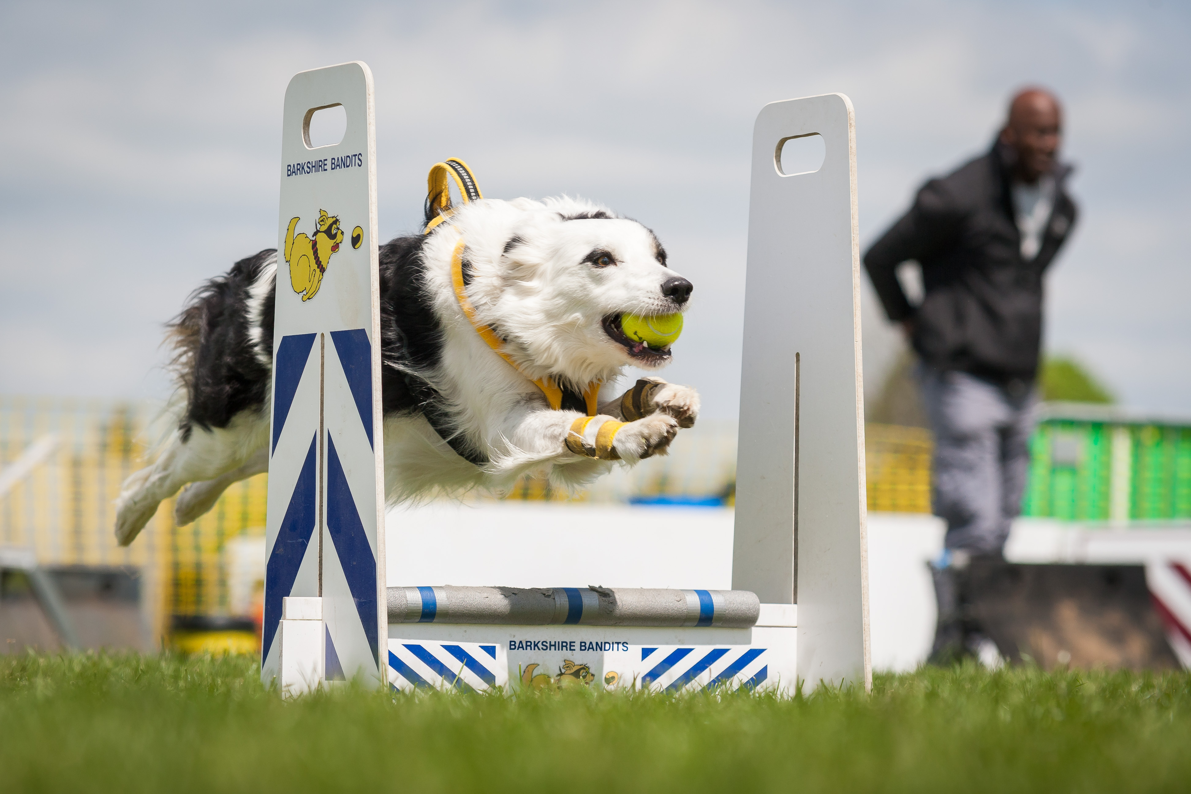 Paws Flyball photos-15559