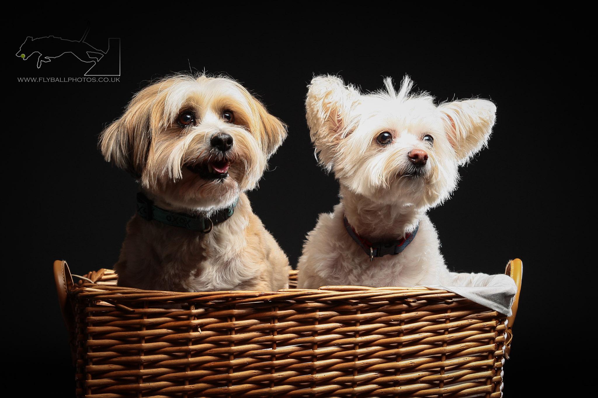 winchelsea pups